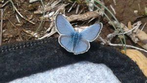Papillon pendant la pause déjeuner