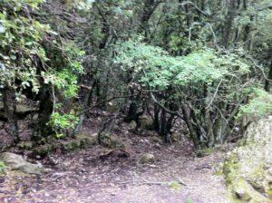 Forêt des Chênes